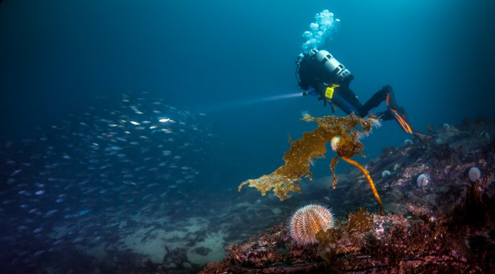 Underwater-Norway-Wide-Angle-Visibility-Diver-Bubbles-Hitra