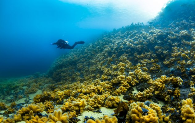 Underwater-Norway-Wide-Angle-Visibility-Diver-Bubbles-Atlantic-R